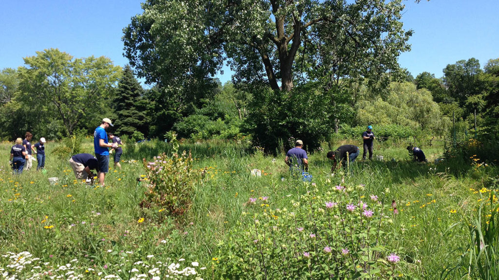 Volunteers work in a grassy prairie at Turtle Park