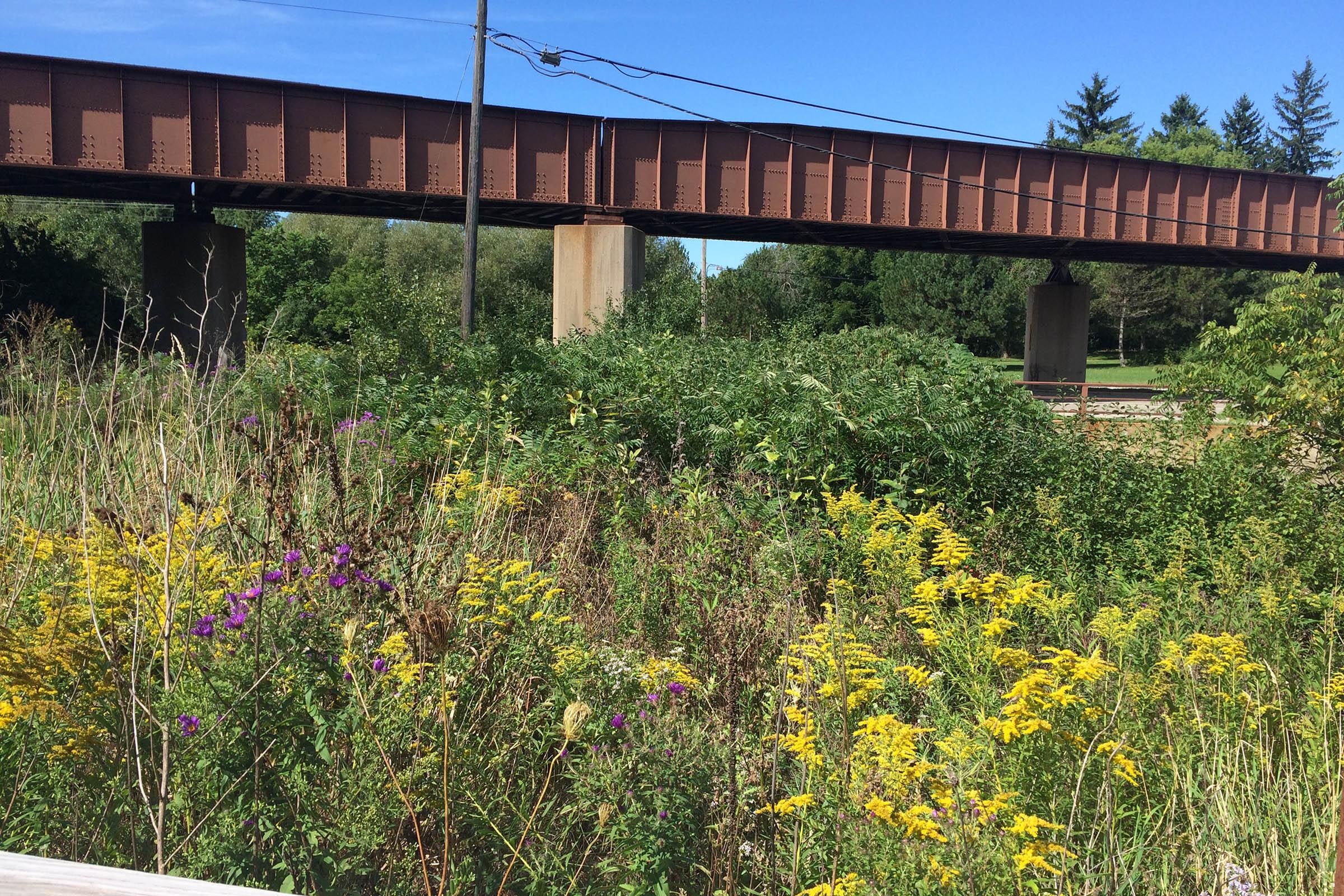 An overpass runs in the background of Koch Woodlands