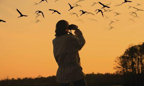 bird watching at night time